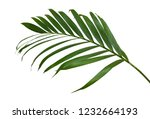 green leaves of palm tree... | Shutterstock . vector #1232664193