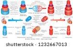 arteries and veins. structure...   Shutterstock .eps vector #1232667013