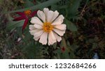 closeup in white flower from... | Shutterstock . vector #1232684266
