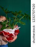 anonymous woman holding a gift... | Shutterstock . vector #1232707420