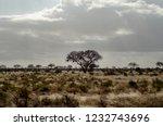 solitary tree landscape in...   Shutterstock . vector #1232743696