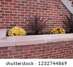 flowers and plant in small...   Shutterstock . vector #1232744869