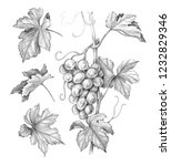 hand drawn grape bunch and... | Shutterstock . vector #1232829346