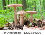 The Group Of Edible Mushrooms ...