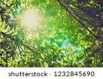 background of green leaves... | Shutterstock . vector #1232845690