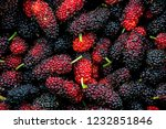 mulberrys fruit. closeup of the ... | Shutterstock . vector #1232851846