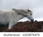 dartmoor white... | Shutterstock . vector #1232874373