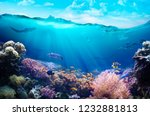 Underwater View Of The Coral...