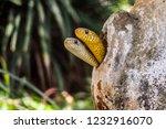 bannerghatta biological park...   Shutterstock . vector #1232916070