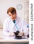 vet doctor examining kittens in ... | Shutterstock . vector #1232941969