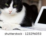 Stock photo relaxed cat with laptop 123296053