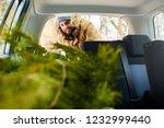 bearded man loading christmas... | Shutterstock . vector #1232999440