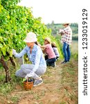 family in vineyard harvesting...   Shutterstock . vector #1233019129