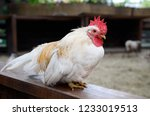 white cock sits on the handrail ... | Shutterstock . vector #1233019513