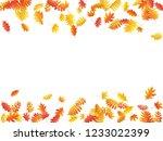 oak  maple  wild ash rowan... | Shutterstock .eps vector #1233022399