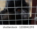 a monkey in a cage  but longing ... | Shutterstock . vector #1233041293