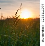 summer landscape. field at... | Shutterstock . vector #1233111079