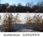 autumn forest  late fall season.... | Shutterstock . vector #1233129373