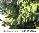 autumn forest  late fall season.... | Shutterstock . vector #1233129376