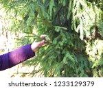 autumn forest  late fall season.... | Shutterstock . vector #1233129379