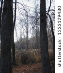 autumn forest  late fall season.... | Shutterstock . vector #1233129430