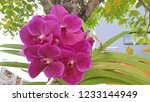 pink orchid blooming on a green ... | Shutterstock . vector #1233144949