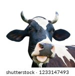 funny cow  isolated on white... | Shutterstock . vector #1233147493