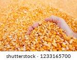 farmer handful of harvested... | Shutterstock . vector #1233165700