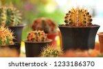 still life photography of... | Shutterstock . vector #1233186370