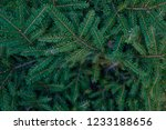 christmas fir tree branches ... | Shutterstock . vector #1233188656
