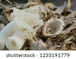 close up of white stinkhorns ... | Shutterstock . vector #1233191779