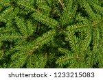 christmas fir tree branches ... | Shutterstock . vector #1233215083