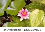 Tropical Aquatic Flower Lotus...