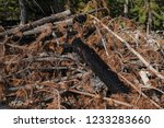 huge pile of cut dry  damaged... | Shutterstock . vector #1233283660