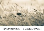 female holding a hand over... | Shutterstock . vector #1233304933