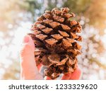 the pinecone brown   Shutterstock . vector #1233329620