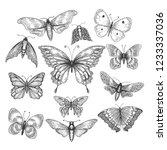 Butterfly  Mariposa Sketch....