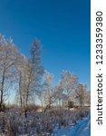 frozen trees in sunlights under ... | Shutterstock . vector #1233359380