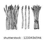 ink sketch of asparagus.... | Shutterstock .eps vector #1233436546