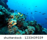 scuba divers and beautiful... | Shutterstock . vector #1233439339