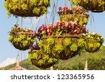 hanging basket of flowers under ... | Shutterstock . vector #123365956