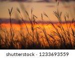 sunset field grass golden | Shutterstock . vector #1233693559