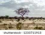 solitary tree landscape in...   Shutterstock . vector #1233711913