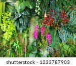 wall of  vegetation green color ...   Shutterstock . vector #1233787903