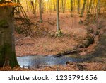 a stream in a beech forest in... | Shutterstock . vector #1233791656