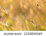 ears on the grass in the park . | Shutterstock . vector #1233830269