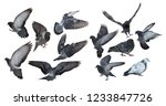 photo of doves isolated on... | Shutterstock . vector #1233847726