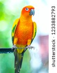 the colorful parrot is relaxing ... | Shutterstock . vector #1233882793