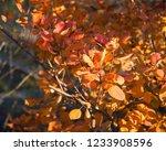 golden autumn in the odessa city   Shutterstock . vector #1233908596