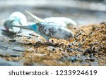 colorful canaries are eating... | Shutterstock . vector #1233924619